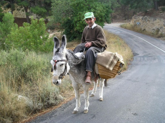 burro3